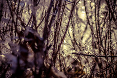 Wander through the crystal forest (Jon.the.canadian) Tags: winter cold ice nature forest canon outdoors sharp whoa jaggad