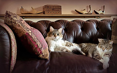 Cats in situ - Explored! (DeeMac) Tags: cats 12mm catportrait catsinthesun beautifulcats catsonsofa em5markii