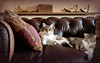 Cats in situ - Explored! (DeeMac) Tags: cats 12mm catportrait catsinthesun beautifulcats catsonsofa em5markii