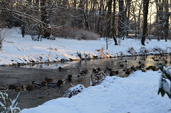Duck Way