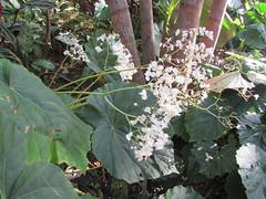 Princeville Botanical Garden (popea53) Tags: hawaii kauai princeville