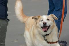 All Photos-9312 (jlh_lunasea) Tags: dog beach romeo manzanita huskador