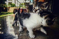 Family (Melissa Maples) Tags: cameraphone cats apple animals turkey spring asia babies trkiye kittens antalya tessa kitties tess iphone  iphone6