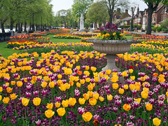 Happy Easter! | Spring Tulips at Bedford Municipal Gardens, UK (ukgardenphotos) Tags: uk bedford spring tulips springflowers eng happyeaster easterflowers embankmentgardens happyflowers prettytulips beddingplants municipalgardens colorfultulips beddingscheme