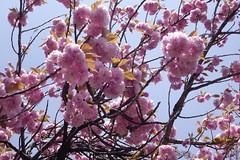 donarium cherry (withcamera) Tags: park flowers trees lines pinetree forest landscape wire nikon sony korea wintertrees  namsanpark    landscapephotography         koreanrosebay dscrx100m2 nikondf  24~70lens koreanrosebaygarden df 24~70