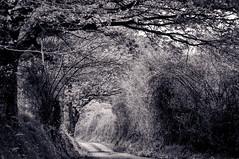 Camino en Latores (ccc.39) Tags: bw byn monochrome rboles camino asturias oviedo latores ramaje