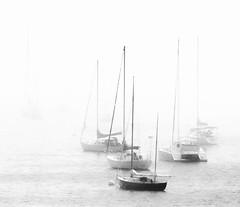 Let's Get Away (rickhanger) Tags: fog sailboat boats blackwhite sailing foggy