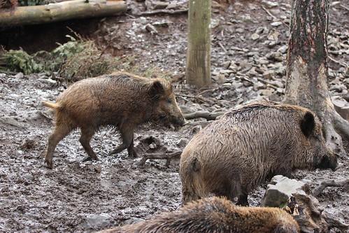 Han-sur-Lesse - Parc animalier