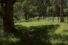 The grass really is greener (duncanmc42) Tags: park flowers trees newzealand green grass fence outdoors track outdoor path walk nelson olympus trail walkway southisland wildflowers lush yarrow leafy fenceline em5 maitaivalley maitairiver microfourthirds duncancunningham ilobsterit duncanmc42