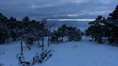 Pine forest in Cape Porkkalanniemi after January sunset (Porkkala, Kirkkonummi, 20160123)i (RainoL) Tags: winter snow forest finland geotagged twilight frost january bluehour fin 2016 uusimaa porkala nyland kirkkonummi porkkala kyrksltt porkkalanniemi 201601 fz200 porkalaudd 20160123 geo:lat=5997063052 geo:lon=2439437483