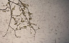 Winter flowers (GP Camera) Tags: flowers winter snow ice lightandshadows quiet bokeh branches calm textures piemonte silence neve fiori vignetting inverno calma rami ghiaccio silenzio monferrato lucieombre quiete allaperto trame nikond7100 sigma1770contemporary