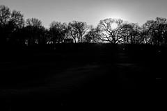 Central Park near sundown (Joel Bischoff) Tags: nyc sunset sundown centralpark settingsun