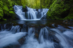 Claw of the Jungle (Willie Huang Photo) Tags: green nature oregon forest river portland landscape waterfall stream scenic jungle pacificnorthwest columbiarivergorge emeraldfalls gortoncreek