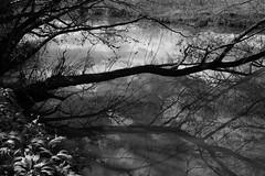 River Stour, Dorset, England (a.pierre4840) Tags: trees england blackandwhite bw reflection monochrome river noiretblanc olympus dorset omd wildgarlic riverstour 1250mm em5 f3563 mzuiko
