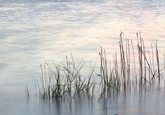 Be Still. Explore (eddieELM) Tags: longexposure ireland sunset lake motion water canon reeds minimal explore cavan 1740 irlanda irlande perpetualmotion shercock leefilter canon600d eos600d rebelt3i kissx5 eddieelm