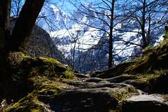 Change of scene: Sentiero panoramico (balu51) Tags: schnee mountain alps forest spring rocks warm hiking peak berge april landschaft bume frhling hikingtrail wanderung wanderweg sonnenschein wurzeln 2016 graubnden bergell badile granitfelsen copyrightbybalu51 sdbnden