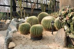 Seoul Botanical Garden (Sunyoung善暎) Tags: zoo spring cityscape korea seoul amusementpark kr southkorea gyeonggido gwacheonsi