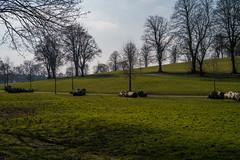Victoria  Park (clogette) Tags: park city trees england grass bristol victoriapark unitedkingdom gb totterdown