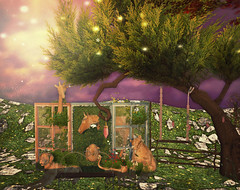 Spring Dream (skyleroctober) Tags: wood wild tree window nature animals fence garden bench cherry spring breath fair frame dreams whimsical swin guardians cubic gacha kreations
