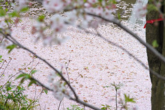 20160410-DSC_8510.jpg (d3_plus) Tags: sky plant flower history nature japan trekking walking temple nikon scenery shrine bokeh hiking kamakura fine daily bloom  28105mmf3545d nikkor    kanagawa   shintoshrine   buddhisttemple dailyphoto   thesedays kitakamakura  28105   fineday   28105mm  historicmonuments  zoomlense ancientcity       28105mmf3545 d700 281053545 nikond700  aiafzoomnikkor28105mmf3545d 28105mmf3545af aiafnikkor28105mmf3545d