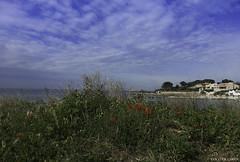 jolis coquelicots (coco de carry) Tags: flowers sky beach fleurs seaside bleu ciel poppies plage coquelicots nuageux borddemer mditrrane