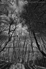 Trees and shadow, Bamburgh, Northumberland (Silent Eagle  Photography) Tags: trees sky bw cloud monochrome canon photography yahoo google shadows silent eagle outdoor northumberland sep northeast bamburgh canoneos5dmarkiii silenteaglephotography silenteagle09