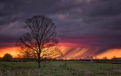 Purple Rain (Captain Nikon) Tags: weather silhouette sunrise dawn moody derbyshire meadow stormy prince purplerain sawley rainshower nikon18105mm nikond7000