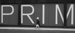 PRIM (Mister Oy) Tags: street manchester streetphotography streetphoto prim davegreen oyphotos oyphotos