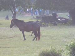 Pferdeschwanz (Christian G2) Tags: horse night penis cambodia kambodscha day cloudy angkorwat pferd horsepenis pferdeschwanz pferdepenis
