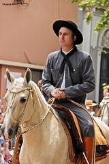 Desfile del Dia de Tradicion 3 (pniselba) Tags: horse criollo caballo buenosaires gauchos gaucho tradicion provinciadebuenosaires sanantoniodeareco areco diadelatradicion
