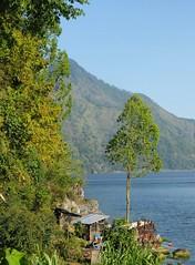 Am Nordende des Batur-Sees; Bali, Indonesien (1) (Chironius) Tags: trees bali tree indonesia see wasser rboles boom arbres rbol albero bume arbre rvore baum trd indonesien batur aa