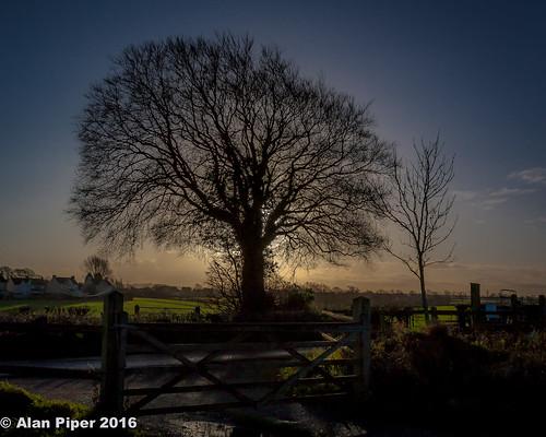 Backlit Winter Tree