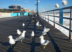 Seagulls chilling on the Boardwalk , Beach too snowy? (Robert S. Photography) Tags: winter people seagulls snow color birds metal canon coneyisland gulls powershot boardwalk february railing benches strolling 2016