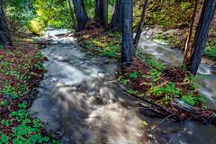 Stranded Stand of Redwoods (Rod Heywood) Tags: green forest river island monterey hiking bigsur canyon hike redwoods montereycounty lush garrapatastatepark soberanescreek shady californiacoast rushing redwoodforest redwoodsorrel soberanescanyontrail soberanescanyon