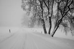 A hazy shade of winter (helena678) Tags: road winter white tree fog fence landscape grey sweden foggy posts scandinavia