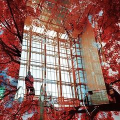 Nadia Park in autumn color (Hodaka Yamamoto) Tags: autumn building tree film silhouette maple lomo lomography doubleexposure double lomolca multipleexposure negative filmcamera doubles multiexposure filmphotography