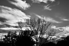 tramonto (giuseppesavo) Tags: sunset alberi pentax cielo linux biancoenero k7 photivo da18135wr pp9354 ubuntumate