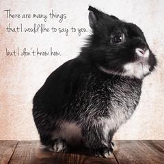 Say something (Jeric Santiago) Tags: pet rabbit bunny animal conejo lapin hase kaninchen   rabbitbit