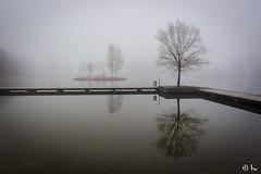 20160228091425 (winkler395) Tags: winter see wasser nebel teich spiegelung baum hausschachen