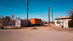 El Paso 2016 (Michaelh71) Tags: desert peacock elpaso unusual everydayscenes ricohgr urbanex everydayunusual desertexploration michaelhead elpasophotographer elpasodesert epdarkstar