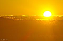 coucher de jaunes (photomateur1) Tags: france nature jaune soleil lumière soir gard uzès hivers theenchantedcarousel