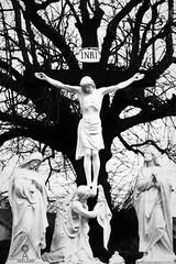 Jesus Christ, Tuamgraney, Clare, Ireland (Aontacht Photography Ireland) Tags: ireland blackandwhite bw tree clare christ cross jesus inri crucifixion tuamgraney