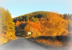 Autumn * Rudartsi (Stella VM) Tags: road autumn light mountain colour nature forest landscape bulgaria  vitosha         rudartsi