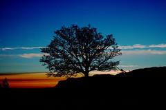 Tree - Sunset (Orry_2000) Tags: trip blue sunset sky orange plant black tree canon wonderful nice flickr outdoor magic great best 1855mm orry lonley rennesy flickrfriday treesunset 750d rennesyhornet