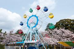 Ferris wheel (Wunkai) Tags: japan  cherryblossom ferriswheel amusementpark sakura    ibarakiken hitachishi  kaminepark