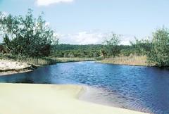 Bool Creek, Great Sandy National Park, Fraser Island, Qld., February, 1989. (garratt3) Tags: ocean sea film creek sand pentax australia qld queensland kodachrome aus billabong fraserisland greatsandynationalpark