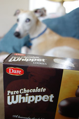 Choices (DiamondBonz) Tags: dog pet cookies focus hound whippet spanky dogchal