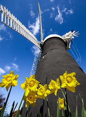 Holgate Windmill, York, Easter 2016 - 3 (nican45) Tags: york sky flower slr mill windmill canon easter march spring yorkshire sails sigma wideangle daffodil sail dslr 1020mm 1020 northyorkshire holgate fantail 2016 hwps 1020mmf456exdc holgatewindmill eos70d 25march2016 25032016