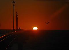 Friday sunrise New Brighton Beach and pier (mpp26) Tags: light beach sunrise pier newbrighton whitefrontedtern newbrightonbeach newbrightonpier