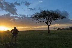 ally enjoying a Serengeti sunset (charlesgyoung) Tags: africa sunset tanzania nikon safari d3 serengetinationalpark charlesyoung nikonfx nomadtanzania karineaignerphotographyexpedition